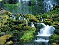 Тропические джунгли и водопад, скринсейвер